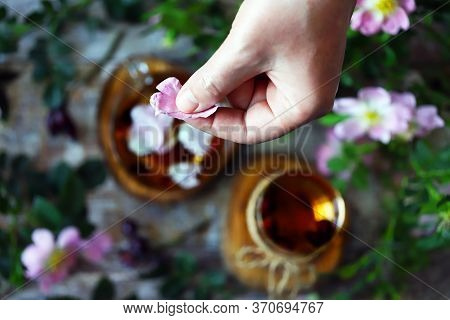 Selective Focus. Hand Puts Rose Petals In A Cup Of Tea. Tea With Rose Petals. Rosehip Flowers And Br