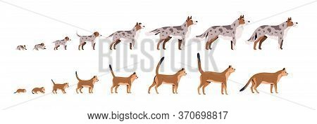 Set Of Pets Growth Stages Vector Flat Illustration. Domestic Animal Grow From Puppy To Dog And Kitty