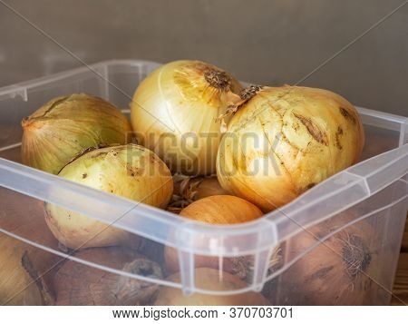 Large Heads Of Unpeeled Onions In A Transparent Container