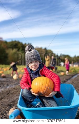 Selecting pumpkins from a pumpkin patch. Small boy sits in the wheelbarro with his selection. Autumn themed image for Halloween, Thanksgiving or Harvest Festivals.