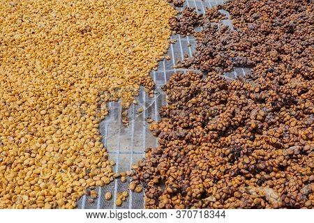 Luwak Coffee, Unclean Coffee Beans,  Kopi Luwak Is Coffee That Includes Part-digested Coffee Cherrie