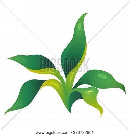 Jungle Vegetation Cartoon Vector Illustration. Long Leaves Fern. Decorative Lush Shrub. Rainforest G