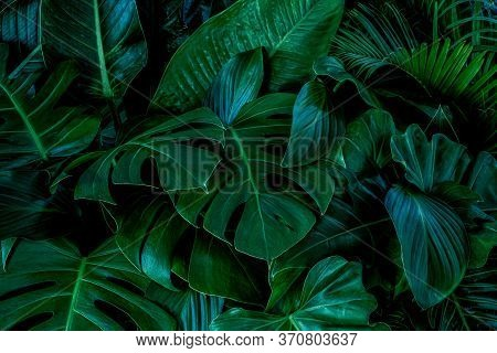 Creative Tropical Green Leaves Plam Monstera And Fean Layout. Nature Spring Concept. Flat Lay.