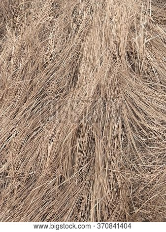 Wilted Steppe Grass As A Background. Autumn Vegetation.