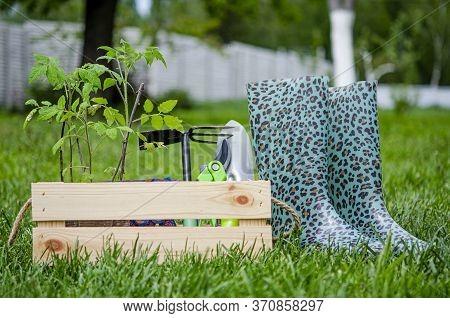 Garden Tools Lie In A Wooden Box In The Garden