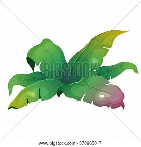 Jungle Vegetation Cartoon Vector Illustration. Banana Leaves. Subtropical Bush. Lush Shrub For Rainf