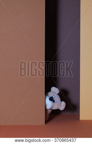 The Curious Plush Dog In The Open Door.  The Cheerful Plush Dog Among Paper Cartons