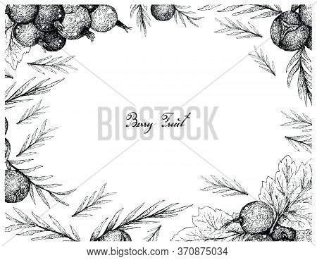 Berry Fruit, Illustration Frame Of Hand Drawn Sketch Of Jostaberries And Juniper Berries Isolated On