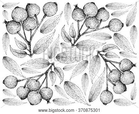Berry Fruit, Illustration Wall-paper Of Hand Drawn Sketch Of Magenta Lilly Pilly,  Magenta Cherry Or