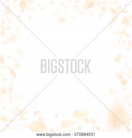 Yellow Orange Flower Petals Falling Down. Outstanding Romantic Flowers Frame. Flying Petal On White