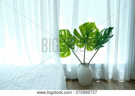 Monstera Plant In Ceramic Vase Beside See Through Sheer Window Curtain.