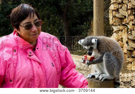 Woman Feeding  Ring-Tailed Lemur