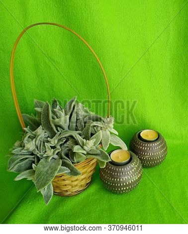 Plant Woolly Stachys With Soft Fluffy Leaves In A Wicker Basket With Two Shaffron Candles On A Green