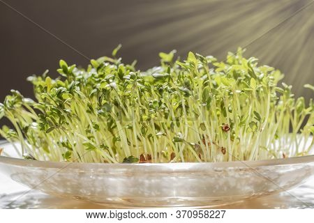 Green Watercress. Fresh Organic Plant Vegetables, Side View Pattern Background
