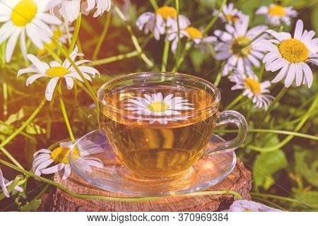 A Cup Of Fragrant Chamomile Tea, In White Chamomile Flowers, In The Rays Of Warm Sunlight, Close-up,