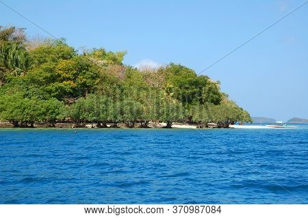 Mangrove Trees Planted In Sand At Calumbuyan Island In Coron, Palawan, Philippines