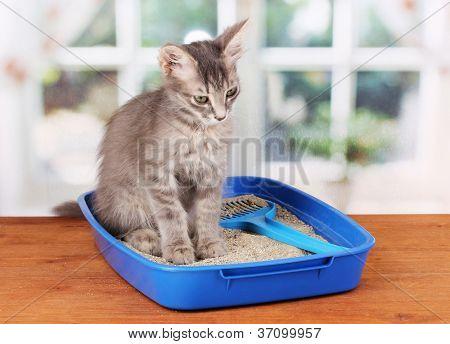 Small gray kitten in blue plastic litter cat on wooden table on window background