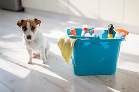 A Diligent Puppy Sits Next To A Blue Plastic Bucket Of Cleaning Products In The Kitchen. A Set Of De