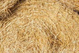 Close Up. Raw   And Organic Dry Straw Bale.  Background Or Texture.