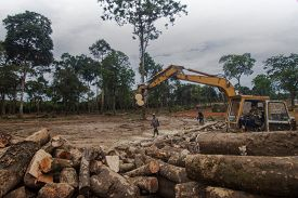 KHAO LAK, THAILAND - 10 JUNE 2020: Deforestation. Logging. Rainforest cut down and environment destroyed for timber and logs