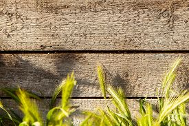 Vintage Wooden Texture Of Board. Wooden Brown Surface. Empty Plank Wooden Wall Texture Background. R
