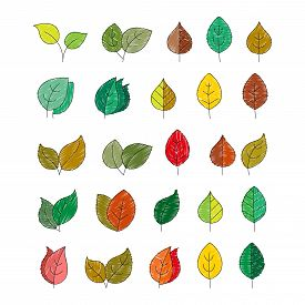 Vector Color Set Of Leaves In The Doodle Style For Design And Decoration Of Thematic Illustrations,