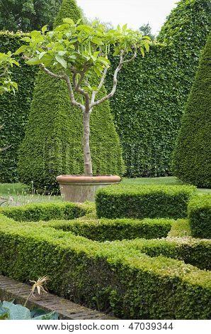 Boxwood Garden Design
