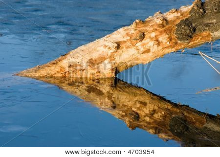 Triangle Reflection