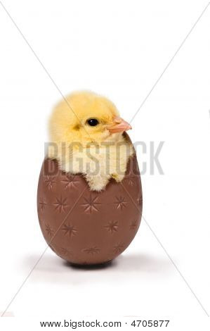 Cute easter chick in chocolate egg