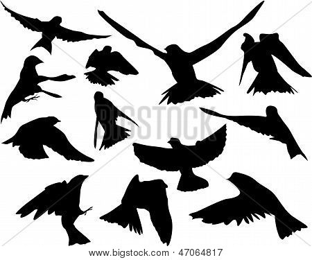 Simple Birds in flight illustration