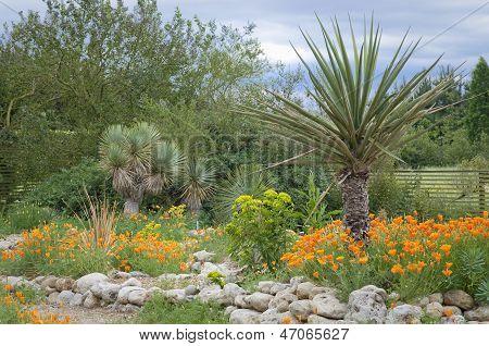 Tropical Spot In Garden