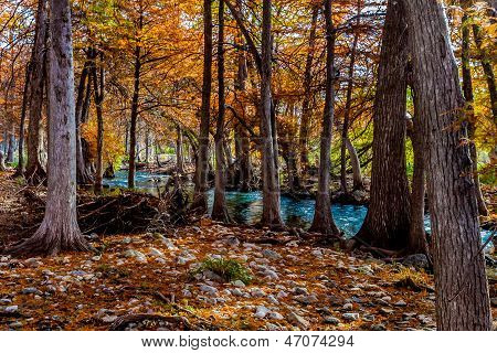 Bright Fall Colors of Texas Cypress Trees with Crystal Clear River in Texas.