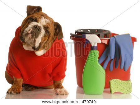 Bulldog en suéter rojo con productos de limpieza