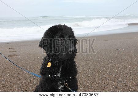 A Dog at Home