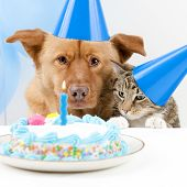 Dog and cat Birthday party with cake poster