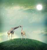 Two Giraffes mother and child in friendship or love theme image at a fantasy landscape poster