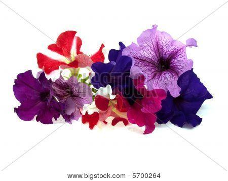 Eight Multi-coloured Flowers