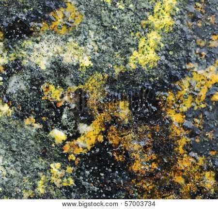 Multi-coloured mold on a damp surface. A closeup poster