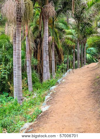 A Pathway in a Palm Tree Nature Garden Park