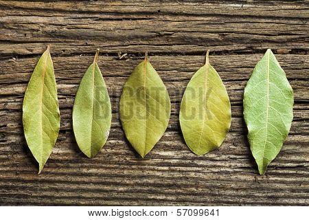 Five laurel leaves on the old board