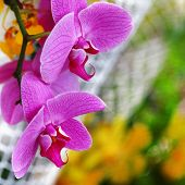 pink orchids composition poster