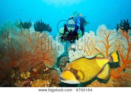 Ostenec a Diver
