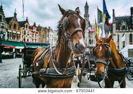 Horse-drawn Carriages In Bruges, Belgium