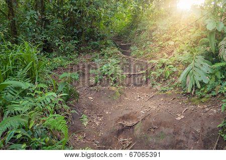 Trail in the jungle of the volcano Merapi. Bukittinggi. Sumatra island. Indonesia. poster
