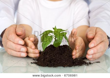 Plant A Seedling Today - Environment Concept