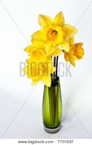 Yellow Daffodil in Green Vase