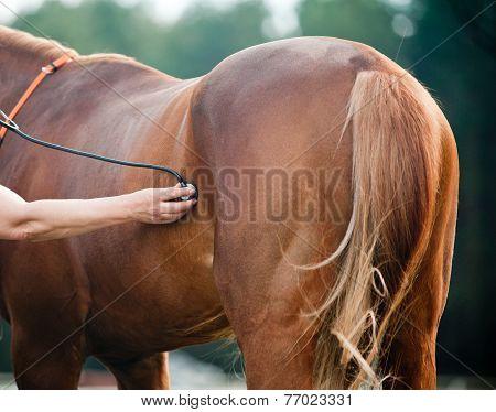 Vet Examining Horse