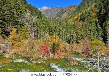 landscape of streaming water and colourful trees at mountainous area in Jiuzhaigou poster