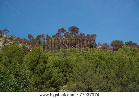 Burnt brown forest