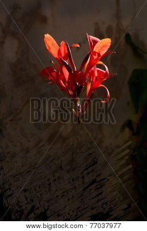 Red chiaroscuro flower